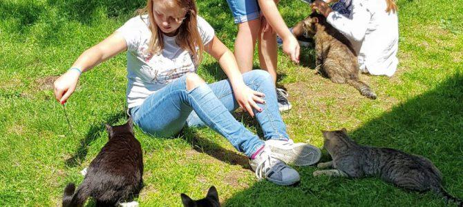 Klasse 5a besucht den Katzentraum
